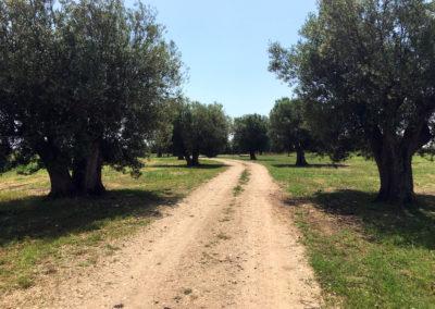 Camping_Fonte_Vulci_Resort_Agriturismo_Ristorante_maremma_toscana_lazio_montalto_di_castro_marina_di_montalto_riminino_13