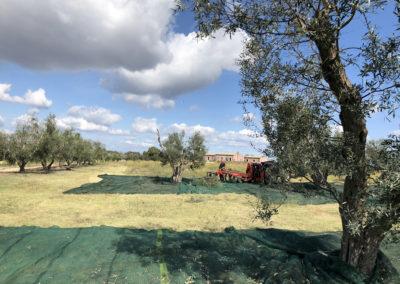 Camping_Fonte_Vulci_Resort_Agriturismo_Ristorante_maremma_toscana_lazio_montalto_di_castro_marina_di_montalto_riminino_21