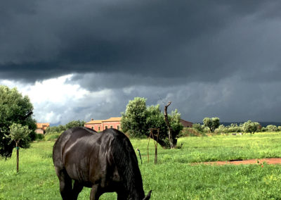 Resort-fonte-vulci-farm-house-italy-tuscany-lazio-wild-nature-etruscan-roman-ruins